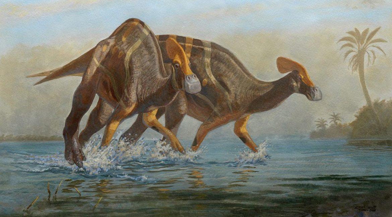 Një lloj i ri dinosauri identifikohet në Meksikë, pjesë të skeletit 72 milionë vjeçar u gjetën në vitin 2013